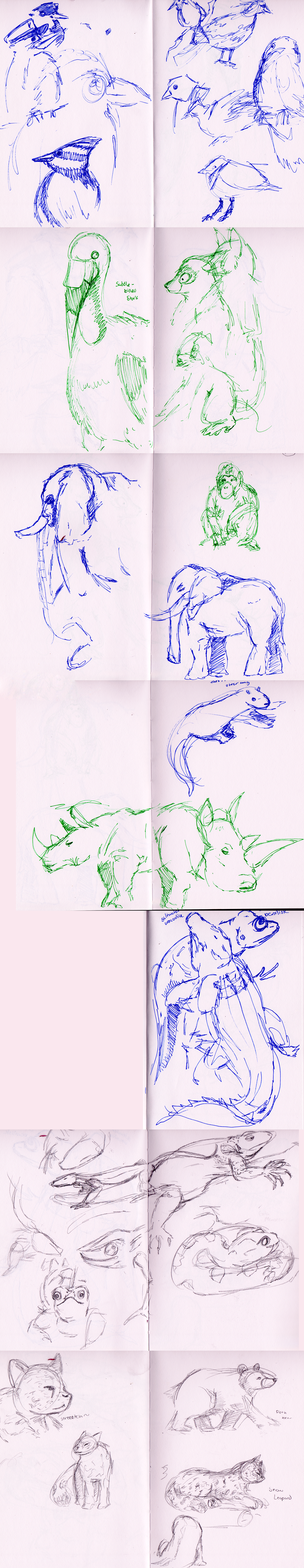 zoosketches