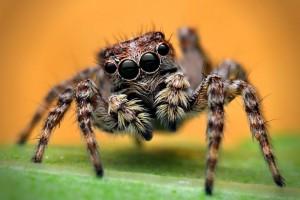 Cute spider!